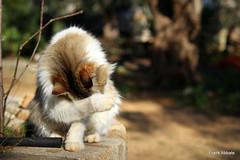 Don't bother me (Frank Abbate) Tags: cat diana campagna gatto gatta pelo fur canon eos 80d