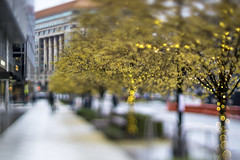 I St. NW at New York Ave. (mangoldm) Tags: city washingtondc christmas bokeh tiltfocus tiltshift lensbaby gold golden