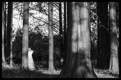 Among the trees (hej_pk / Philip) Tags: fuji fujifilm xa1 fujixa1 gwangju kwangju sydkorea czj czjtessar50mmf28 zeiss carlzeiss m42 manualfocus trd trees solljus solnedgng sunlight latesun model jena dress glade planetk ddr skog russianmodel woods shadows germanlens optik trunks scythian c21varangian
