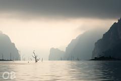 Paysage (Olivier Brosseau) Tags: thalande paysage leverdusoleil arbre calme monochrome parcnational