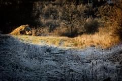 Herbst und Winter (beudii) Tags: herbst winter fall autumn licht schatten light shadow sun sonne eis ice snow schnee frost jahreszeit mnnerstadt