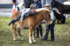 Mounting difficulties (Frank Fullard) Tags: frankfullard fullard candid portrait pony horse boy youth problem ballinasloe fair horsefair lol fun saddle galway irish ireland hard stirrup cap help sunset cowboy jockey horseman rider ride