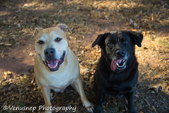 Bear and Magic 2 (venusnep) Tags: sandycreekpark sandy creek park athensga athens ga georgia privatedogpark private dog dogpark g pack gpack dogs pets funday november 2016 nikond610 nikon d610