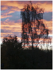 301-366 Sunrise Silhouette (Aged Desperado) Tags: 366 nikon nikkor nikonflickraward d5000 1755mm 1755 landscape sun