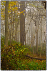 Fog in the Forest (RKop) Tags: a77 1650ssmf28 californiawoodspark ohio raphaelkopanphotography sony