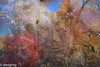 Indian Summer…………….. HSS (dwight g) Tags: canon 6d 24105 lensbaby 50mm fall color trees flowers ps