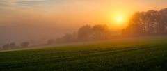 Morning Dew (Markus Trienke) Tags: schalksmhle nordrheinwestfalen deutschland de sauerland canon eos 70d autumn fall field dew morning sunrise sun trees fog foggy misty green orange rural landscape