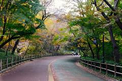 Seoul: Namsan Park (stuckinseoul) Tags: photo asian kpop seoul asia sigma2470mmf28exdghsm namsan southkorea city dullegil canoneos6d korea capital namsanpark photograph   iseoulu i u autumn flickrseoul republicofkorea korean  seoulkorea autumnleaves namsandullegil kr
