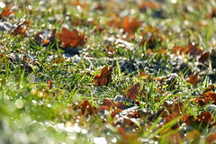 Wenn autumn and winter play together in the sun (Goruna) Tags: fall leaves autumn winter grass bokeh brightness shiny goruna