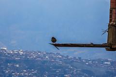 Bird over La Paz (@CathieAaT) Tags: elalto lapaz bolivia