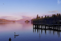 A Bit Fresh (Karl Ruston) Tags: lake water morning reflections swan district bowness windermere tree clouds mountain outdoor landscape serene