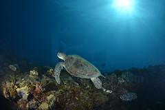 2013 04 METTRA OCEAN INDIEN 0727