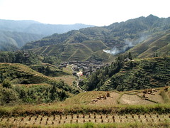 PA182942 (hardy1809) Tags: china pen dorf village rice terrace smoke landwirtschaft harvest reis olympus valley crop bauer feuer tal fume ernte rauch ep1 dazhi qualm reisterrassen