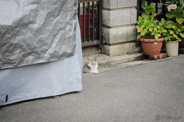 Today's Cat@2013-06-22