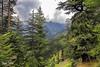 Lalazar Trek, Nathia Gali (Max Loxton) Tags: pakistan nature beautiful natural pakistani yasirnisar beautifulpakistan pakistaniphotographers pakistaniphotographer pakistaniphotographersgroup maxloxton pakistaniat pakistaniphotograhers theotherpakistan thevibrantcolorsofpakistan yasirnisarphotography