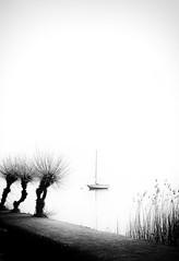 Calm (memories-in-motion) Tags: trees light shadow bw water mono calm sw schwarz minimalsim flaute weis boatboot windstille