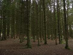 Can't See The Wood (Bricheno) Tags: wood trees forest scotland escocia kilmarnock szkocja schottland ayrshire deancastle scozia cosse  esccia deancastlecountrypark   bricheno scoia