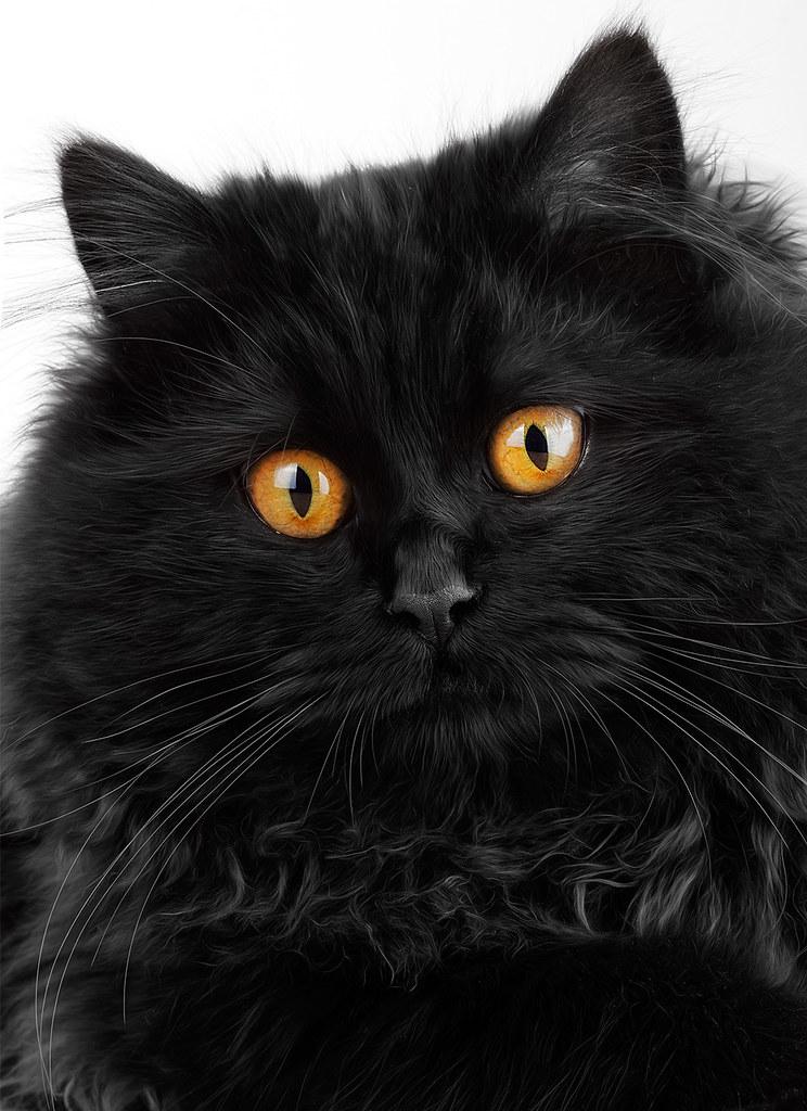 5ec201f749 Black panther (aiman4ik) Tags  light wallpaper black cute look cat eyes  background stock