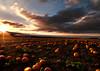 K7_22978 (Bob West) Tags: sunset ontario countryroads k7 southwestontario bobwest