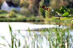 autumn (DTR Photography) Tags: autumn green nature belgium ardennen ardennes herfst natuur belgi