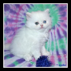 snowball7weeks