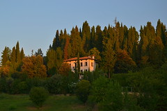 House and cypress forest in the early morning hours (echumachenco) Tags: morning italien summer italy house casa italia estate sommer haus august agosto morgen cypresses asolo mattino veneto cipressi zypressen nikond3100