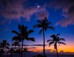 Silhouetted Palms (mojo2u) Tags: sunset silhouette palms hawaii maui nikon2470mm nikond800
