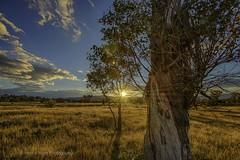 Gumtree Sunset (John A Hunt Photography) Tags: sunset australia canberra act d600