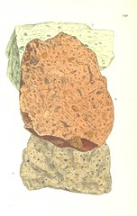 Image taken from page 558 of 'British Mineralogy: or coloured figures intended to elucidate the mineralogy of Great Britain. By J. Sowerby (with assistance). F.P' (The British Library) Tags: large mineral publicdomain vol05 bldigital mechanicalcurator pubplacelondon date1804 sysnum003450252 sowerbyjames page558 imagesfrombook003450252 imagesfromvolume00345025205