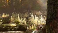 autumn contemplation (Mattijn) Tags: autumn music forest cat video faith surreal montage
