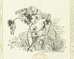 Image taken from page 234 of 'Blossoms by the Way. A collection of choice poems. Edited by C. A. Cooke. Border designs by Sweeney' (The British Library) Tags: bldigital date1882 pubplaceboston publicdomain sysnum000773839 cookecarrieadelaide small vol0 page234 mechanicalcurator imagesfrombook000773839 imagesfromvolume0007738390 sherlocknet:tag=tree sherlocknet:tag=summer sherlocknet:tag=differ sherlocknet:tag=white sherlocknet:tag=form sherlocknet:tag=apr sherlocknet:tag=climate sherlocknet:tag=flower sherlocknet:tag=open sherlocknet:tag=john sherlocknet:tag=black sherlocknet:tag=common sherlocknet:tag=palm sherlocknet:tag=fern sherlocknet:tag=heat sherlocknet:tag=source sherlocknet:category=nature fairy fairies cherub cherubs angel angels flowers paint painting