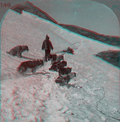 """Anaglyph- """"Eskimo Dog Team on Trail"""" (Rescued by Rover) Tags: red dog team husky labrador view cyan anaglyph company card keystone eskimo stereoscope hopedale"""