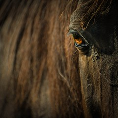 Stable Vision (Carl's Captures) Tags: horse eye portrait equestrian equine vision sight stable nature creature minimal abstract dof bokeh wheatonillinois dupagecounty forestpreservedistrictofdupagecounty chicagoland danadaequestriancenter nikond5100 tamron182703563diiivcpzd lightroom5 squarecrop