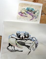 Guaiamum (Cardisoma guanhumi Latreille) - together (Dona Mincia) Tags: art animal watercolor painting paper arte crab study together pintura juntos aquarela guaiamum cardisomaguanhumilatreille