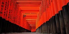 """Tori Gates, Fushimi Inari Taisha (Shrine)"" - Kyoto, Japan (TravelsWithDan) Tags: orange japan temple kyoto widescreen ngc torigates fushimiinaritaisha worldtrekker"