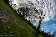 Happyness makes you slide, sadness makes you tilt (BenChapmanphoto) Tags: england brown tree green leaves clouds canon garden outside outdoors norfolk bluesky fisheye foliage fullframe bb bedbreakfast dslr tilt zenitar16mm ultrawide downhammarket stowbridge club16 canon5dmkiii crabbsabbey leningover