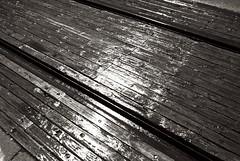 20140429_L1011502 (pixelsrzen) Tags: blackandwhite rain spring digitalcamera adobergb1998 agfaportriga leicam82 appleaperture3 leicasummicronm1228asph11604