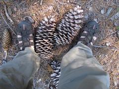Size 11 Pinecones (Mike Rettberg) Tags: lakes basin