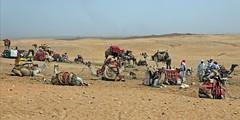 """Bedouins"" -- Giza, Egypt (TravelsWithDan) Tags: city urban tourism desert candid ngc egypt cairo pyramids camels giza bedouin worldtrekker"