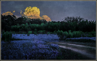 Dusk in Texas Hill Country_4122.2