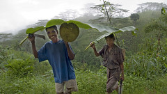 Banana leaf brolly 0026 (shahidul001) Tags: people man male woman female easttimorese bananaleaf brolly umbrella smile smiling hill fruit jackfruit carry carrying horizontal color colour easttimor southeastasia asia drik drikimages