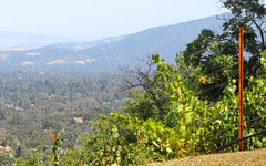 IMG_3754 (kz1000ps) Tags: tour2016 california sanfrancisco bayarea saratoga mountainwinery vineyard siliconvalley aerial vista skyline america unitedstates usa scenery landscape