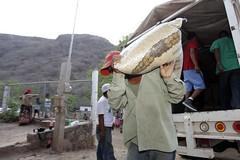 BENEFICIARIOS DE LA COMUNIDAD AYUDAN A DESCARGAR EL CAMIN DE DICONSA. (diconsa_mx) Tags: diconsa maz nayarit