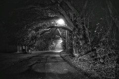 the scariest road in town leads to..... (jeneksmith) Tags: halloween scary creepy limbs oaks blurry winter fog smalltown treetunnel monochrome bw blackandwhite nighttime night streetlights trees mississippi street canon
