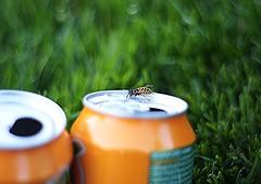 Galway - Irlande 2016 (SuzonProust) Tags: galway irlande irish lac du connemara abeille canette soda parc herbe vert orange boisson insecte