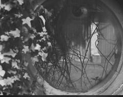 The eye (inga_mandarins) Tags: overlay black noise