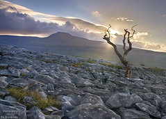 Scorched (Lee Summerson) Tags: sunrise sunlight sunburst twistletonscar theyorkshiredales landscape tree ingleborough canon canonuk sigma18300 cokin hdr clouds grass rocks