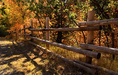 Fenced Fall (arbyreed) Tags: arbyreed fence fall polefence fencedfriday hff fallcolors fenceline trees falltrees organic shadow perspective