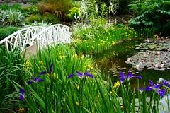 Hoart Botanical Gardens (RodShot) Tags: bridge hobart iris pond water botanical gardens tasmania
