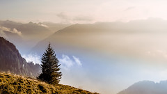 From where I stand (explored) (marco soraperra) Tags: landscape tree trees forest woods mountains sky clouds sunset light sunlight fog nature autumn september grass explore misty atmosphere warm cold view lovely